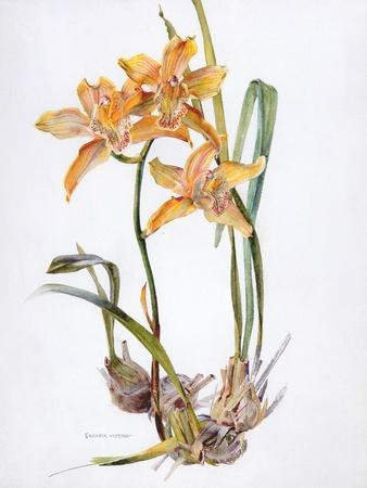 Orchid Cymbidium Pearlite, C.1980-Brenda Moore-Stretched Canvas Print