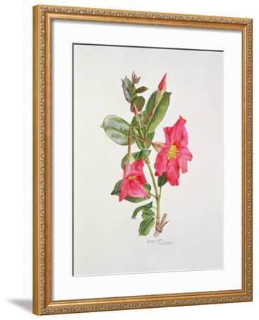 Passiflora Princess Eugenia, C.1980-Brenda Moore-Framed Giclee Print