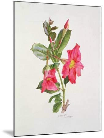 Passiflora Princess Eugenia, C.1980-Brenda Moore-Mounted Giclee Print