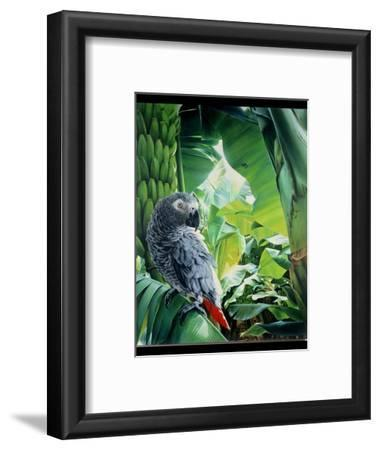 African Grey Parrot, 1990-Sandra Lawrence-Framed Giclee Print