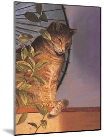 Contemplation-Simon Cook-Mounted Giclee Print