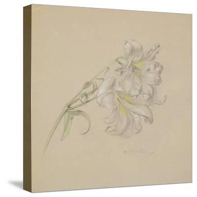 Lily-Albert Williams-Stretched Canvas Print