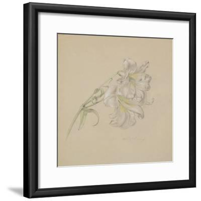 Lily-Albert Williams-Framed Giclee Print