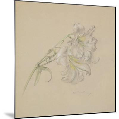 Lily-Albert Williams-Mounted Giclee Print