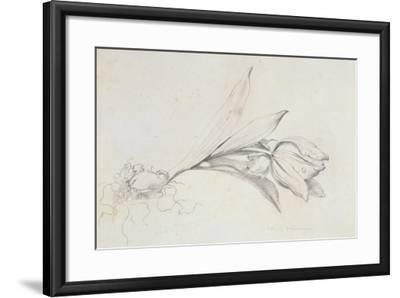 Tulip-Albert Williams-Framed Giclee Print