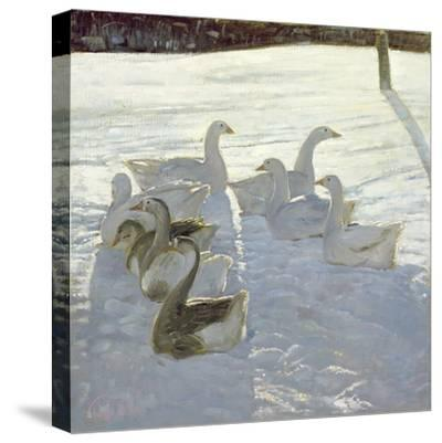 Geese Against the Light-Timothy Easton-Stretched Canvas Print