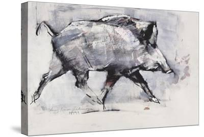 Young Boar, Bialowieza, Poland-Mark Adlington-Stretched Canvas Print