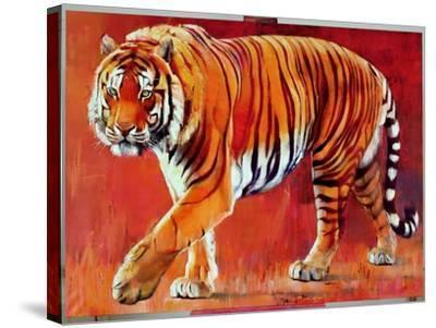 Bengal Tiger-Mark Adlington-Stretched Canvas Print