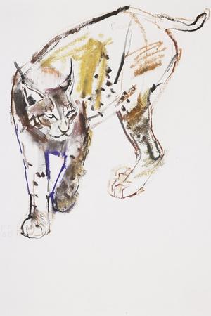 European Lynx-Mark Adlington-Stretched Canvas Print