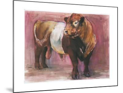 Zeus, Red Belted Galloway Bull, 2006-Mark Adlington-Mounted Giclee Print