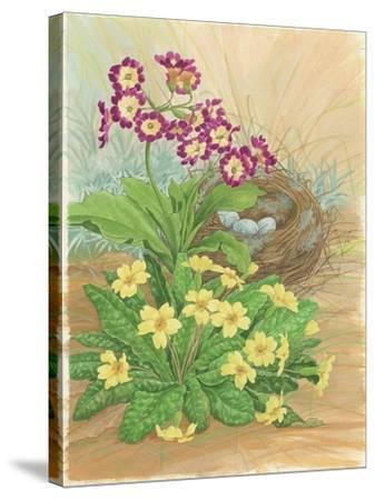 Auricula, Primrose and Nest, 1998-Linda Benton-Stretched Canvas Print