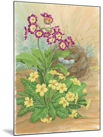 Auricula, Primrose and Nest, 1998-Linda Benton-Mounted Giclee Print