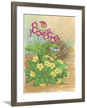 Auricula, Primrose and Nest, 1998-Linda Benton-Framed Giclee Print
