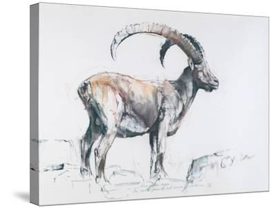 Venerando Stambecco, 2006-Mark Adlington-Stretched Canvas Print