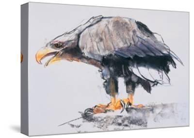 White Tailed Sea Eagle, 2001-Mark Adlington-Stretched Canvas Print