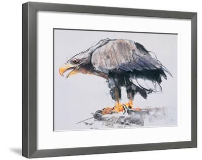 White Tailed Sea Eagle, 2001-Mark Adlington-Framed Giclee Print