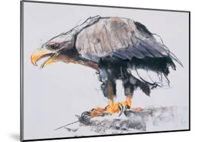 White Tailed Sea Eagle, 2001-Mark Adlington-Mounted Giclee Print