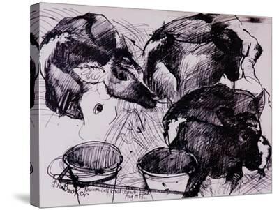 Calves, Damp, Newborn, 1978-Brenda Brin Booker-Stretched Canvas Print