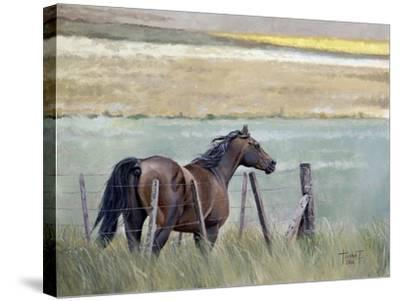 Dreams of Freedom, 2010-Cruz Jurado Traverso-Stretched Canvas Print