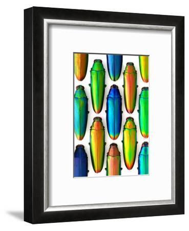 Cobaltina-Christopher Marley-Framed Photographic Print