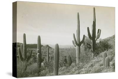 Canon des Coches, Tortolita Mountains, USA-D. T. MacDougal-Stretched Canvas Print