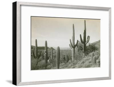Canon des Coches, Tortolita Mountains, USA-D. T. MacDougal-Framed Photographic Print