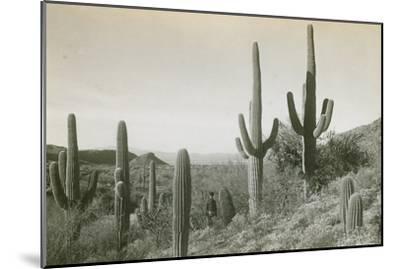 Canon des Coches, Tortolita Mountains, USA-D. T. MacDougal-Mounted Photographic Print