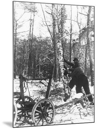 A Couple Cutting Down a Tree for Firewood, 21st February 1947-German photographer-Mounted Photographic Print