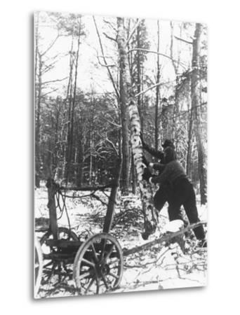 A Couple Cutting Down a Tree for Firewood, 21st February 1947-German photographer-Metal Print