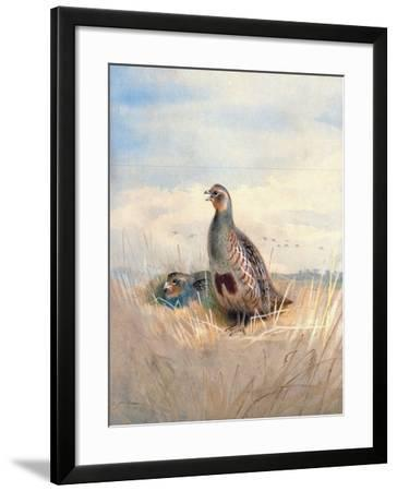 Two English Partridges, 1903-Archibald Thorburn-Framed Giclee Print