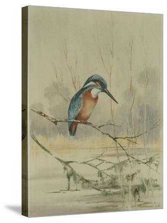 Kingfisher, Illustration from 'A History of British Birds' by William Yarrell, c.1905-10-Edward Adrian Wilson-Stretched Canvas Print