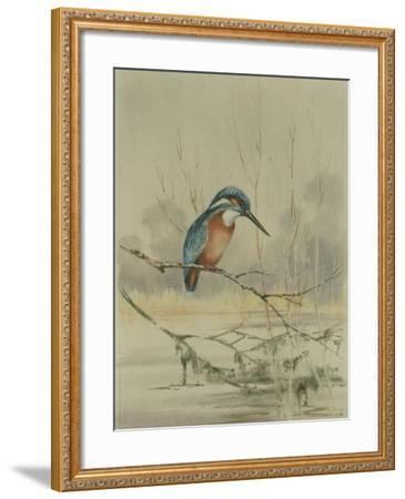 Kingfisher, Illustration from 'A History of British Birds' by William Yarrell, c.1905-10-Edward Adrian Wilson-Framed Giclee Print