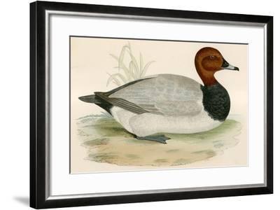 Pochard-Beverley R. Morris-Framed Giclee Print