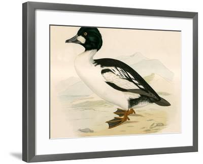 Golden Eye-Beverley R. Morris-Framed Giclee Print