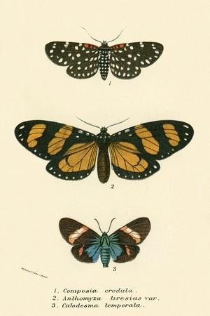 Butterflies-English School-Framed Giclee Print