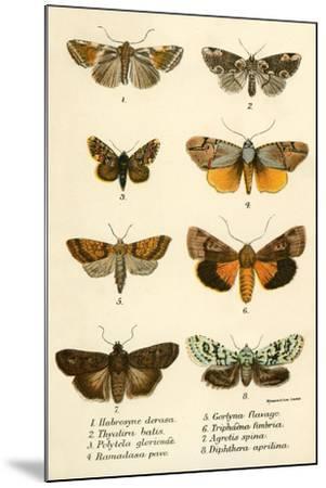 Butterflies-English School-Mounted Giclee Print