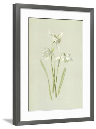 Snowdrop-Frederick Edward Hulme-Framed Giclee Print