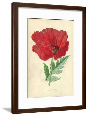 Oriental Poppy-Frederick Edward Hulme-Framed Giclee Print