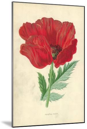 Oriental Poppy-Frederick Edward Hulme-Mounted Giclee Print