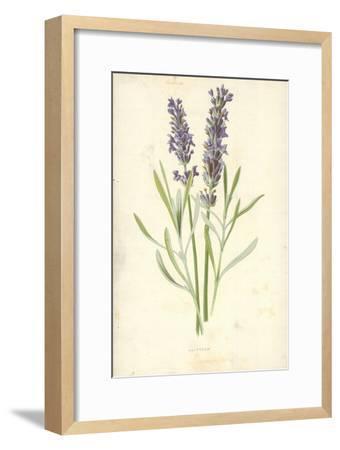 Lavender-Frederick Edward Hulme-Framed Giclee Print