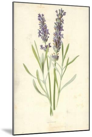 Lavender-Frederick Edward Hulme-Mounted Giclee Print