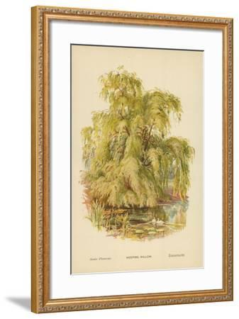 Weeping Willow-William Henry James Boot-Framed Giclee Print