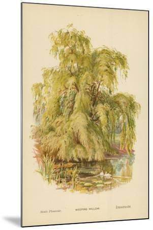 Weeping Willow-William Henry James Boot-Mounted Giclee Print