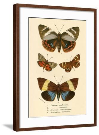 Butterflies-English School-Framed Giclee Print