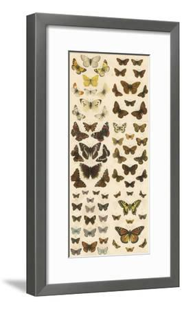 Our British Butterflies-English School-Framed Giclee Print