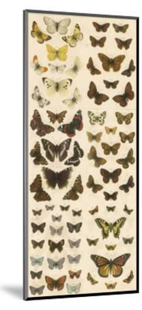 Our British Butterflies-English School-Mounted Giclee Print