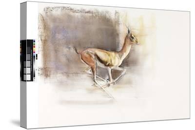 Desert Wind (Arabian Gazelle), 2010-Mark Adlington-Stretched Canvas Print