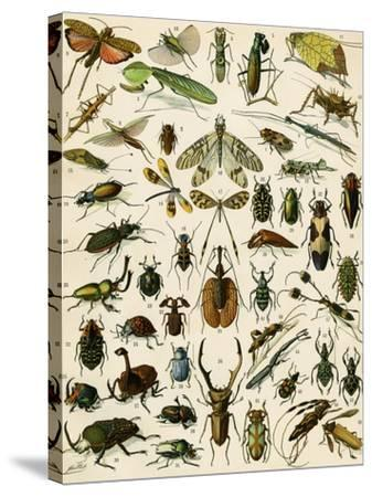 Insects, Including Beetles--Stretched Canvas Print
