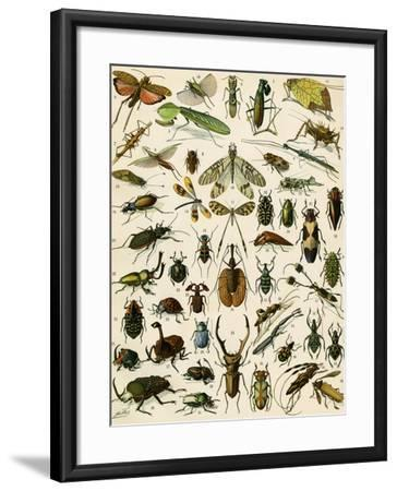 Insects, Including Beetles--Framed Giclee Print
