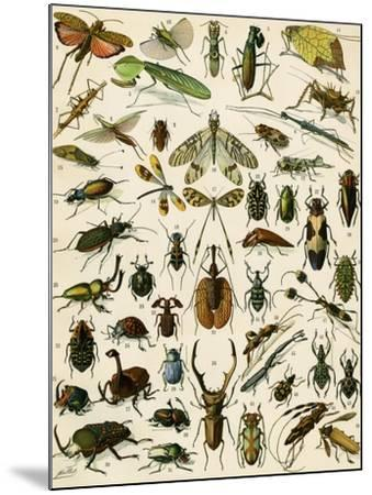 Insects, Including Beetles--Mounted Giclee Print